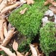 鮮やかな緑色の苔
