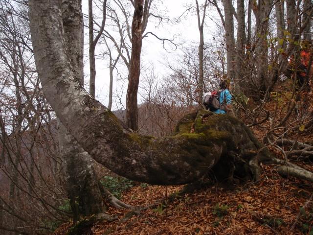 曲がりくねった木