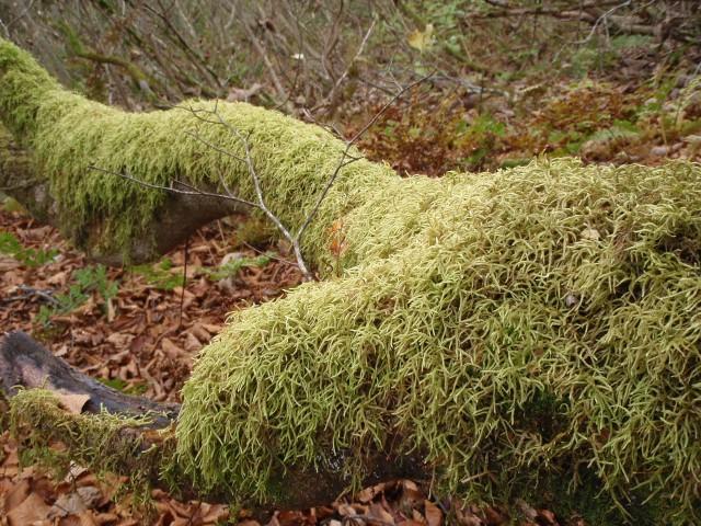 うっとりする苔