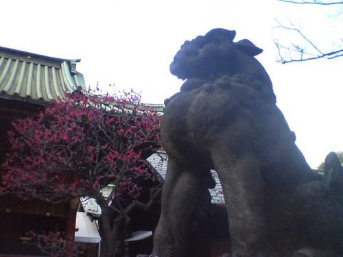 080308東京根津神社