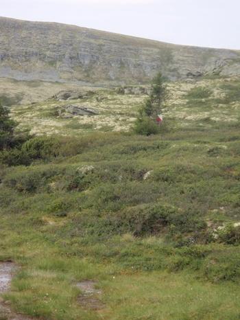 20100817ringebufjullet20